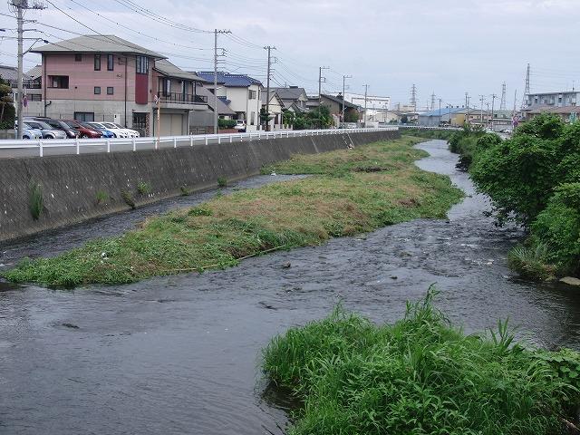 やっぱりヘビが出た!小潤井川の草刈り_f0141310_7274525.jpg