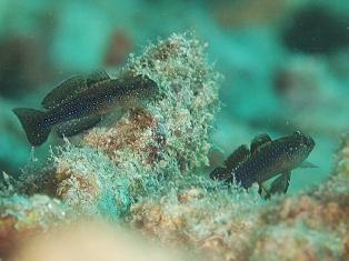 ムンジャの謎の魚の答_c0211615_8434165.jpg