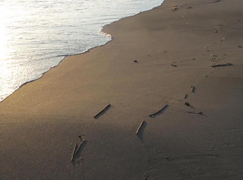 秋谷海岸 散歩(3)_d0150720_7234822.jpg