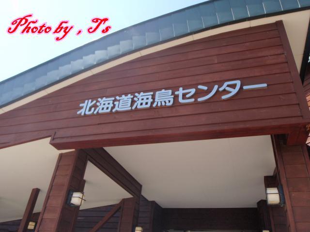 f0147821_1337142.jpg