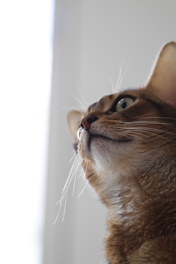 [猫的]復活_e0090124_6394837.jpg