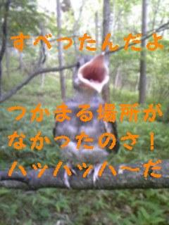ヒナ_f0148927_21544593.jpg