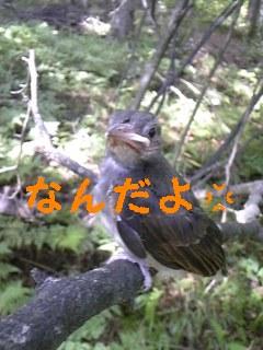 ヒナ_f0148927_21592233.jpg
