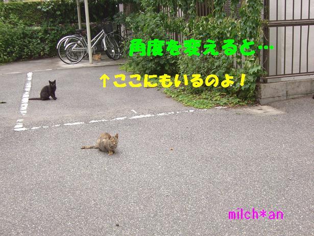 b0115642_20203175.jpg