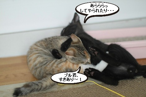 仔猫さんだけど、先輩だよん!_e0151545_21382191.jpg