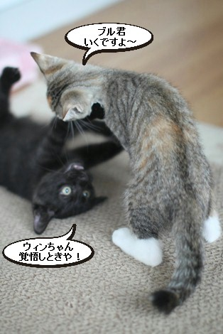仔猫さんだけど、先輩だよん!_e0151545_2142758.jpg
