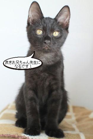 仔猫さんだけど、先輩だよん!_e0151545_21461850.jpg