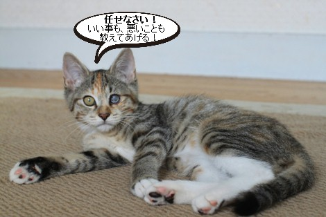 仔猫さんだけど、先輩だよん!_e0151545_21474228.jpg