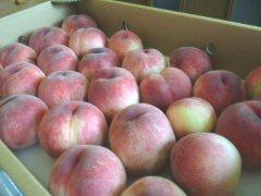 気がつけば桃の季節_f0019247_1573179.jpg