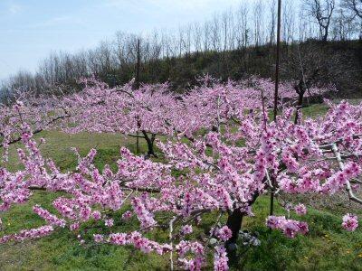 気がつけば桃の季節_f0019247_1583750.jpg