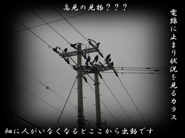 b0172951_20175180.jpg