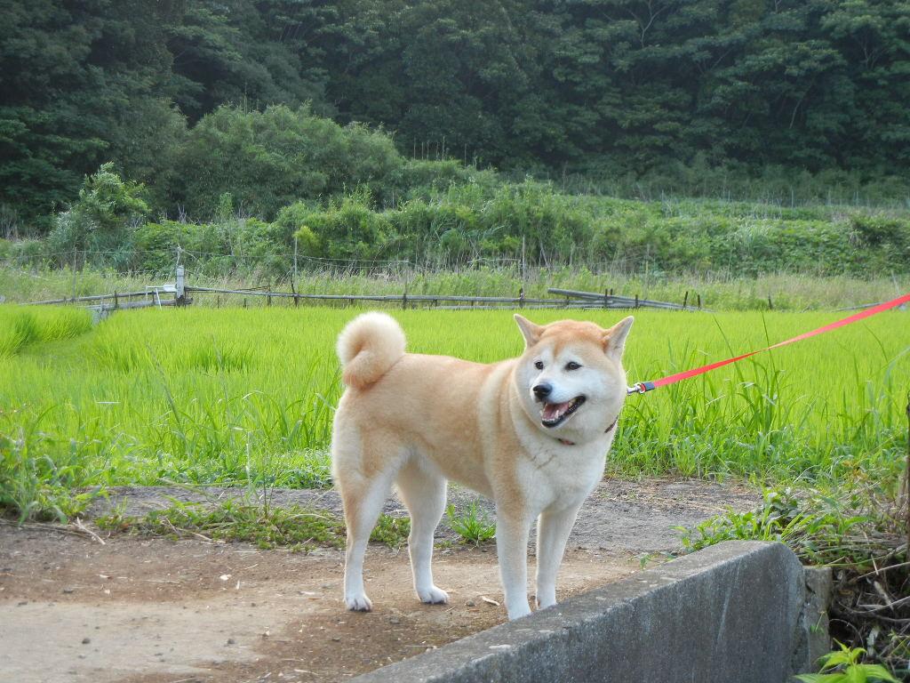2011年7月22日(金)不思議なホオヅキ!_f0060461_1330482.jpg