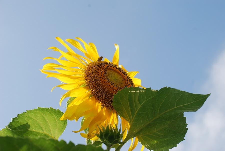 台風の去った後の花たち_c0187781_212174.jpg