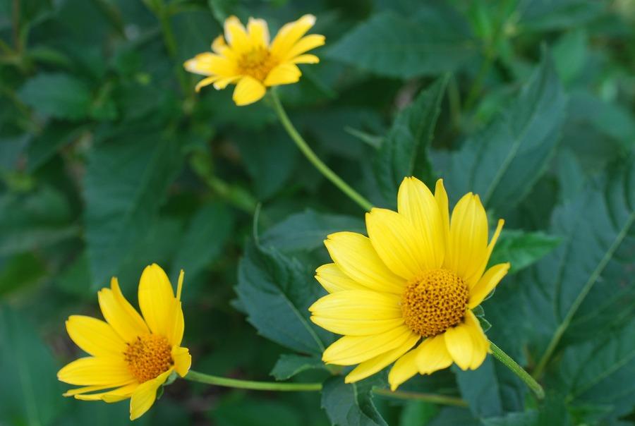 台風の去った後の花たち_c0187781_21221789.jpg