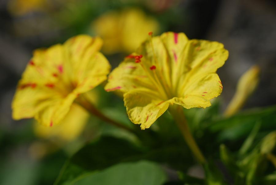 台風の去った後の花たち_c0187781_2124319.jpg