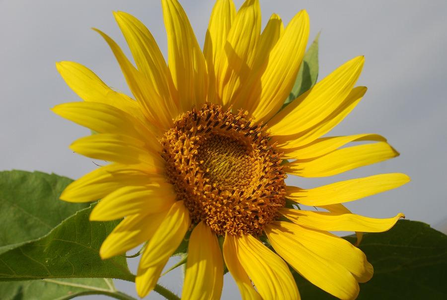 台風の去った後の花たち_c0187781_21252745.jpg