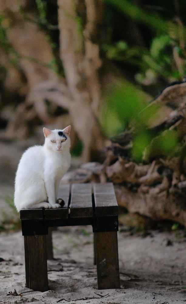 島のネコたち・・・_c0124795_76227.jpg