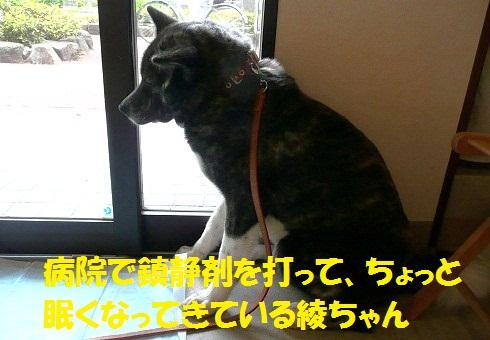f0121712_1543561.jpg