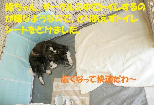 f0121712_1653110.jpg