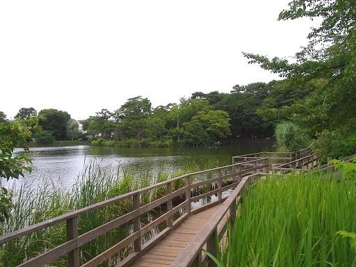 水辺の散歩@洗足池_c0192215_8392671.jpg