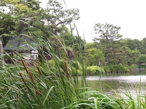 水辺の散歩@洗足池_c0192215_8465629.jpg