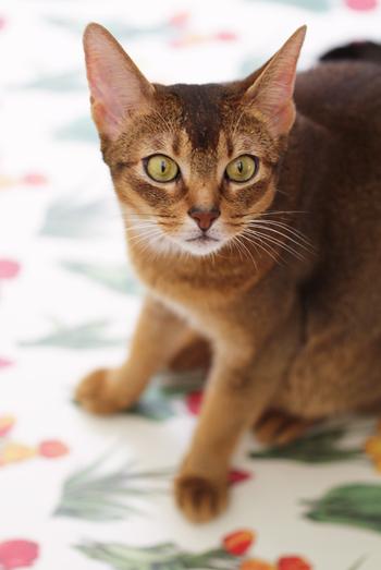 [猫的]猫ふん次点作 _e0090124_1051197.jpg