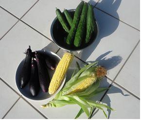 収穫 (夏)_a0212046_1436542.jpg