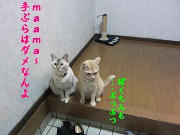 b0151748_13585548.jpg