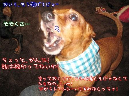 a0091865_2003740.jpg