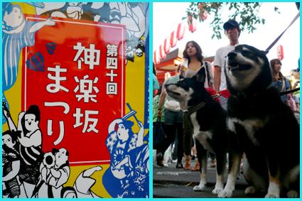 神楽坂ほおづき市、夏祭り。楽しいね暑気払い。_e0236072_11285787.jpg
