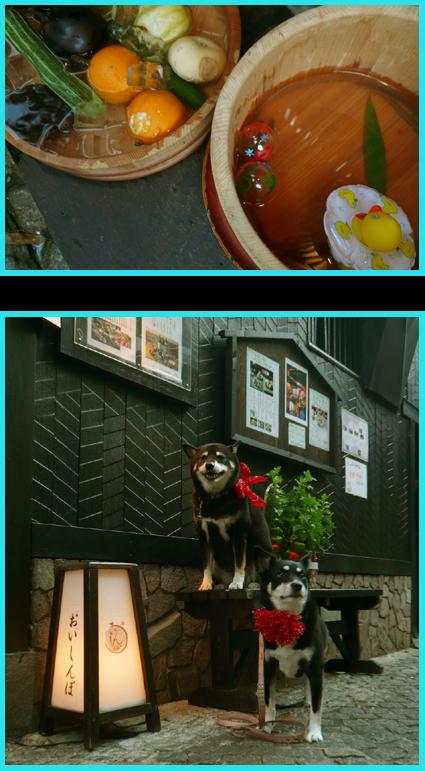 神楽坂ほおづき市、夏祭り。楽しいね暑気払い。_e0236072_1139546.jpg
