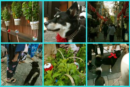 神楽坂ほおづき市、夏祭り。楽しいね暑気払い。_e0236072_1151867.jpg