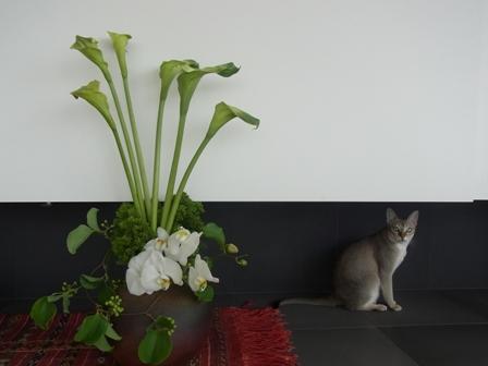 愛猫ディアモンの休日_a0138976_18202658.jpg