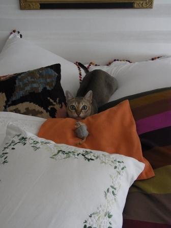 愛猫ディアモンの休日_a0138976_1820979.jpg