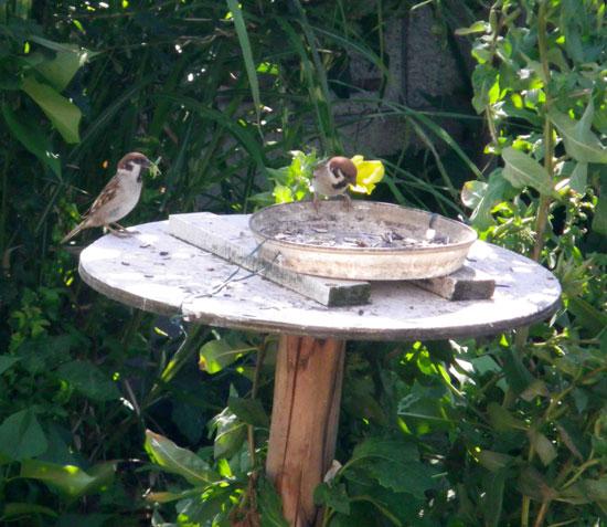 雀の餌台と覗き窓(^^)v_a0136293_16414994.jpg