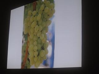 ワインについて  の授業_a0154793_1450490.jpg