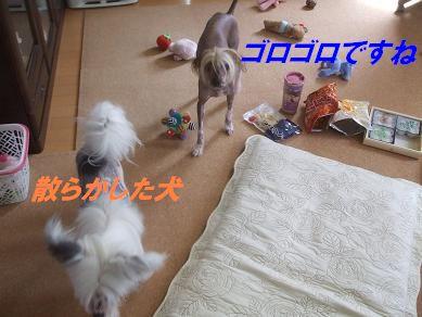 f0179203_10515910.jpg