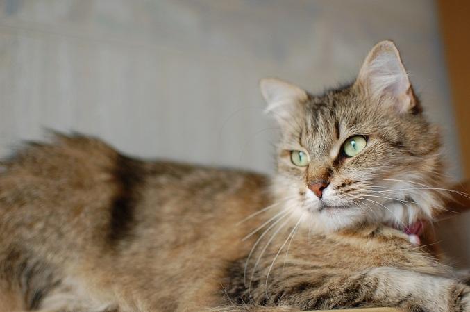 トナリのネコはウツクシイ_f0085219_1941789.jpg