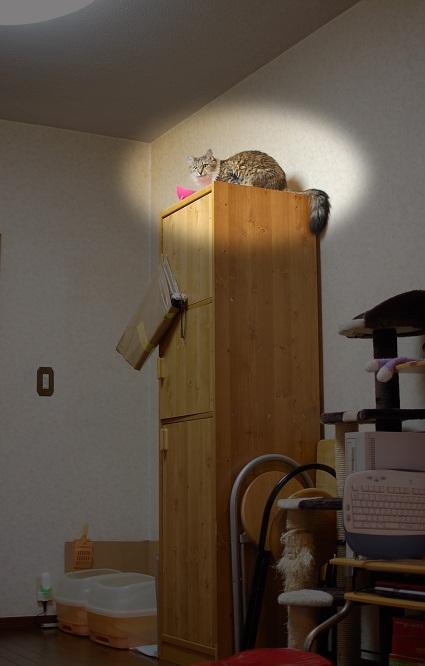 トナリのネコはウツクシイ_f0085219_19435361.jpg