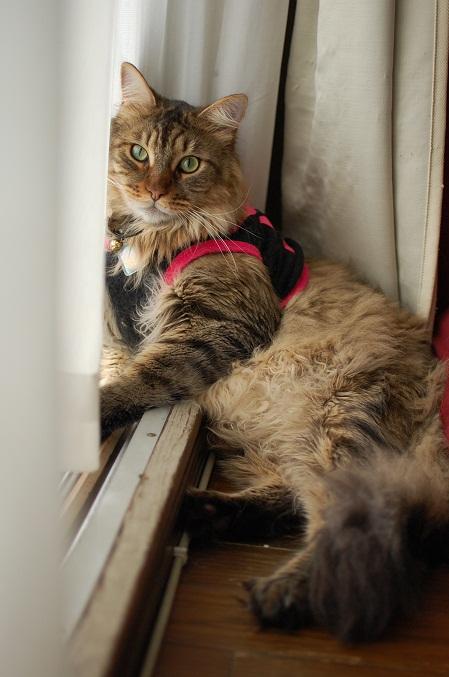 トナリのネコはウツクシイ_f0085219_19513533.jpg