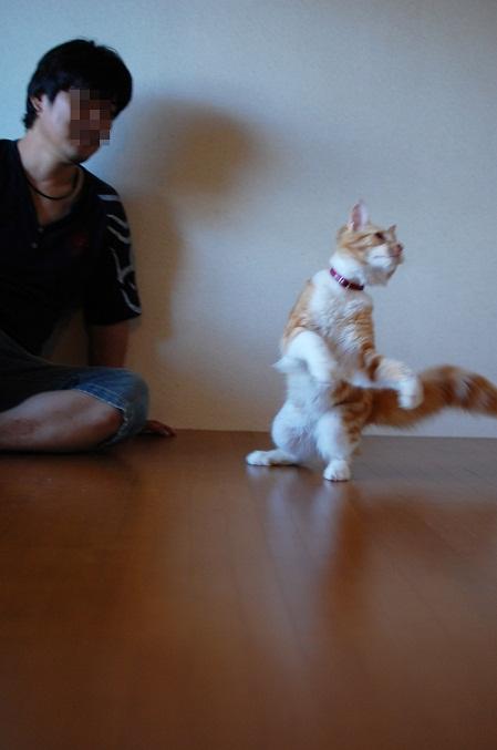トナリのネコはウツクシイ_f0085219_20133426.jpg