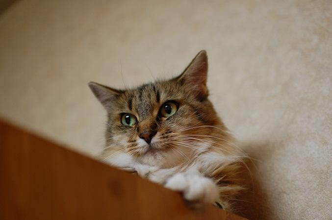 トナリのネコはウツクシイ_f0085219_2036335.jpg