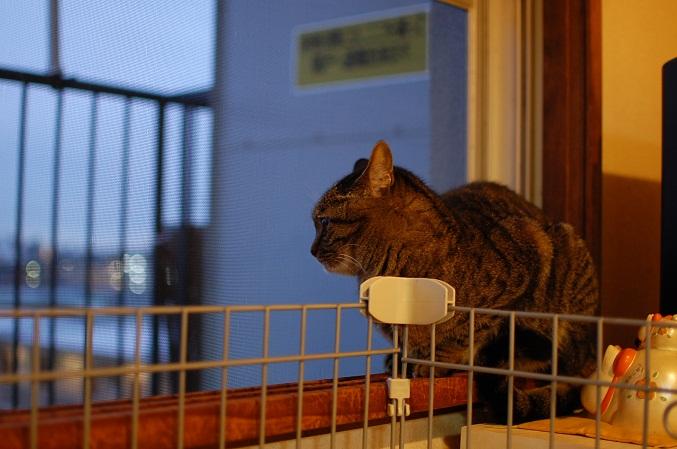 トナリのネコはウツクシイ_f0085219_20372987.jpg