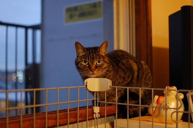 トナリのネコはウツクシイ_f0085219_20382856.jpg