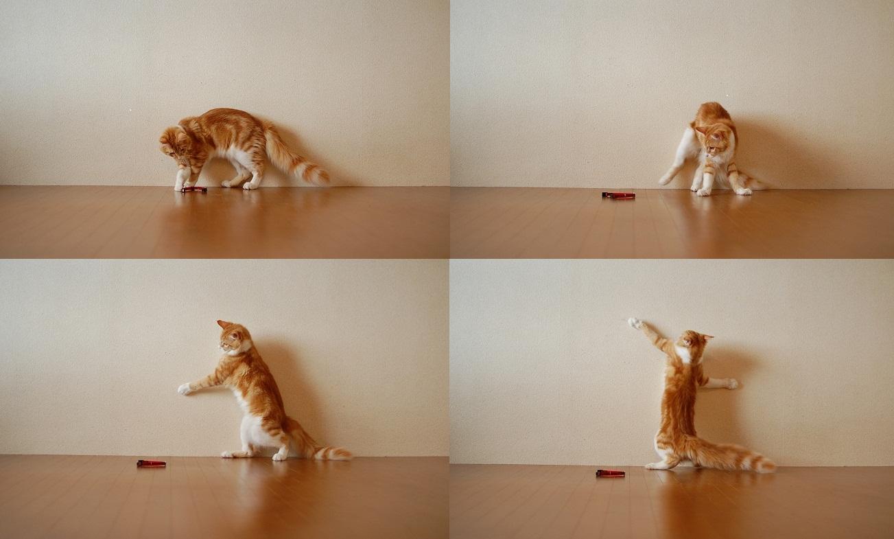 トナリのネコはウツクシイ_f0085219_204541.jpg