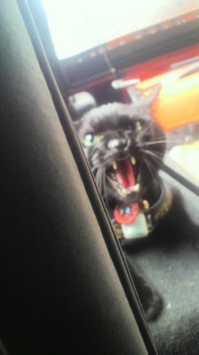 トナリのネコはウツクシイ_f0085219_2074952.jpg