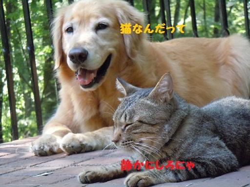 f0114128_11295061.jpg