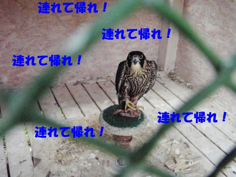 d0077740_2245991.jpg