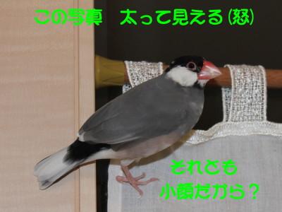b0158061_21345685.jpg