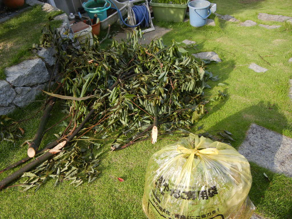 2011年7月24日(日)夏の木は伸び放題!_f0060461_16432487.jpg